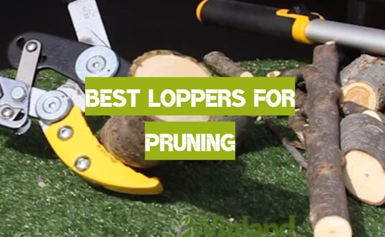 10 Best Loppers for Pruning