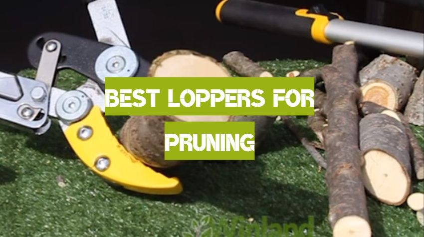Best Loppers for Pruning