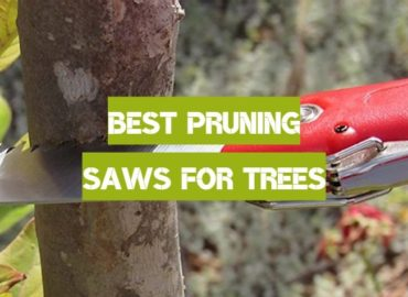 10 Best Pruning Saws for Trees